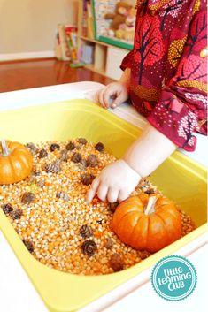 Fall Sensory Bin - Little Learning Club