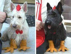 bricolage: Halloween '09 with the Colonel  Scottie chickens