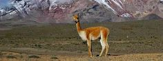 This is one of my Spirit Animals!!  ~~  Spanish Abroad, Inc. Learn Spanish in Cuenca, Ecuador. Cuenca City ...