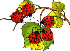 Божьи коровки — Yandex.Disk Ladybug Art, Gifs, Book Of Job, A Bug's Life, Pintura Country, Embroidery Patterns Free, Images, Creations, Bloom