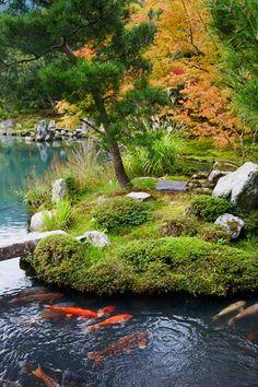 Japanese moss gardens