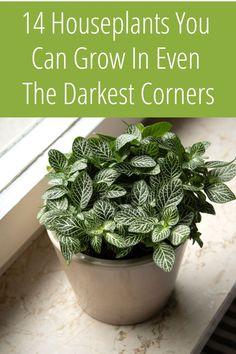 House Plants Decor, Plant Decor, Easy House Plants, Plantas Indoor, Household Plants, Decoration Plante, Low Light Plants, Inside Plants, Pot Plante