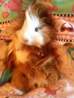 My sweet Penelope
