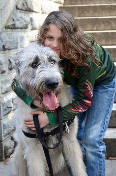 Irish wolf hound...love em!