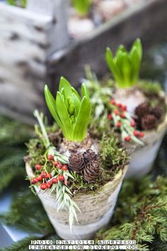 Trädgårdsflow: 1:a adventsöppet i garden flow shop. bulbs in a vases-pines-christmas gift