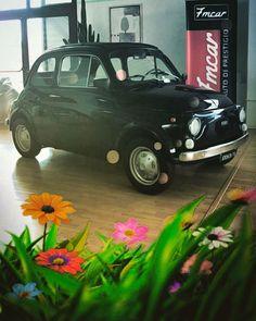 #fiat500#fiat#fiatclub#500#oldcar#automobile#auto#automotive#autodepoca#cars#carsofinstagram#instacar#vintage#vintagecar#fmcar#cesenatico#rimini#milano#showroom#picoftheday#flowers http://blog.fmcarsrl.com/wp-content/uploads/2017/05/18161888_297917673970459_2825100792908742656_n.jpg http://blog.fmcarsrl.com/index.php/2017/05/04/fiat500fiatfiatclub500oldcarautomobileautoautomotiveautodepocacarscarsofinstagraminstacarvintagevintagecarfmcarcesenaticoriminimilanoshowroompicofthed