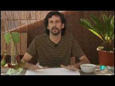 Cuaderno de Gaia 17º  Plantas insectívoras, adaptaciones y curiosidades