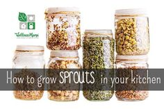 How to Grow Sprouts In Your Kitchen - Grow sprouts and microgreens in your own kitchen with minimal supplies and have fresh local superfoods at your table all year!