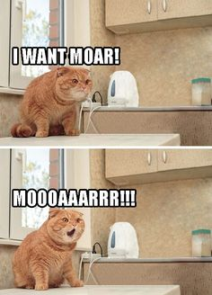 70 Ideas funny cats memes laughing so hard animal captionsYou can find Memes and more on our Ideas funny cats memes laughing so hard animal captions Funny Animal Memes, Cute Funny Animals, Funny Cute, Cute Cats, Funny Memes, Funny Stuff, Funny Kitties, Freaking Hilarious, Funny Animals