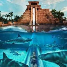 Cool rooms on pinterest water slides water parks and cool bedroom