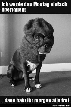 Pug Puppies, Terrier Puppies, Havanese Dogs, Funny French, Boston Terrier Love, Boston Terriers, Terrier Breeds, Jack Russell Terrier, Happy Dogs