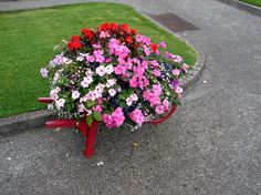When it comes to making the garden stylish, some seem to have more of a creative touch than others. Full Sun Flowers, Amazing Flowers, Container Flowers, Container Plants, Wheelbarrow Decor, Full Sun Planters, Landscaping With Rocks, Outdoor Plants, House Front