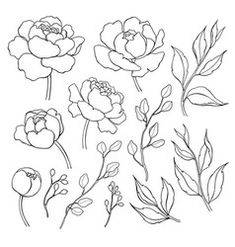 Peony flower and leaves line drawing Vector hand drawn outline floral set Simple botanical peonies branch and berry countur Black ink sketch Great for tattoo invitations greeting cards decor Stock Vector Colourbox on Colourbox # Line Flower, Peony Flower, Flower Art, Tattoo Outline, Outline Drawings, Art Drawings, Flower Sketches, Drawing Sketches, Peony Drawing