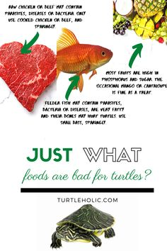 Some food, like chocolate, is horrible to give to turtles. However, other foods owners give are just as awful. So, just what foods are bad for turtles? Turtle Care, Pet Turtle, Raw Chicken, How To Cook Chicken, Like Chocolate, Turtles, Fish, Foods, Pets