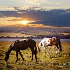 Farm Animal Photograph - Horses Grazing At Sunset by Elena Elisseeva