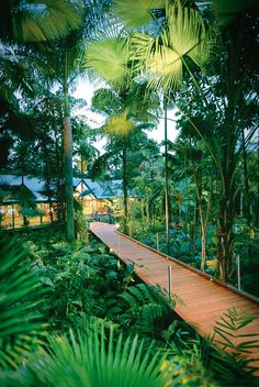 The boardwalk leading to Silky Oaks Lodge and Healing Waters Spa, The Daintree Rainforest, Australia