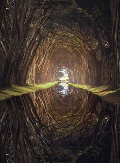 A Cypress nature Tree Tunnel ✨ Point Reyes National Park, California. Cypress Tree Tunnel, Cypress Trees, Landscape Photography, Nature Photography, Travel Photography, Photography Photos, Destinations, California National Parks, California California