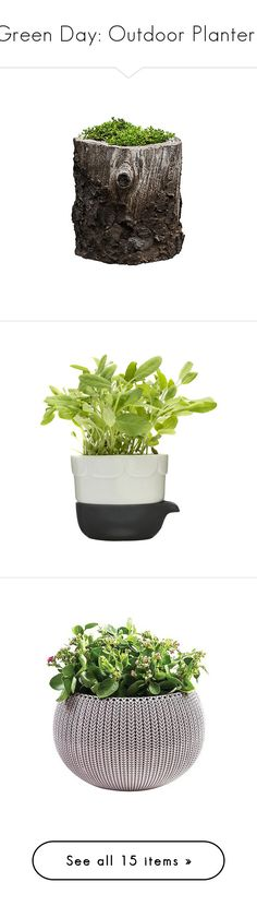 """""""Green Day: Outdoor Planters"""" by polyvore-editorial ❤ liked on Polyvore featuring outdoorplanters, home, outdoors, outdoor decor, plants, filler, flowers, garden, backgrounds and outdoor"""