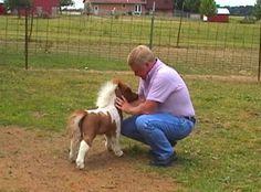 IPB Image Tiny Horses, Cute Horses, Pretty Horses, Horse Love, Miniature Ponies, Beautiful Horses, Majestic Horse, Animals Beautiful, Cute Baby Animals