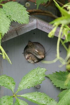 Two little squirrels in a birdhouse...
