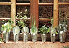 Cultivation of hydroponic lettuce Garden Pool, Terrace Garden, Herb Garden, Vegetable Garden, Home And Garden, Garden Art, Terrariums, Hydroponic Lettuce, Organic Herbs