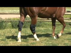 The benefits of Back on Track boots - brought to you by Greenhawk www.greenhawk.com