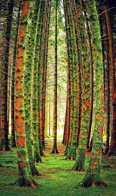 20 Amazing Pictures of Nature's Creativity - Trees - Character is like a tree and reputation like a shadow. The shadow is what we think of it; the tree is the real thing. Cool Pictures, Beautiful Pictures, Pictures Of Trees, Nature Pictures, Unique Trees, Colorful Trees, Green Trees, Nature Tree, Nature Nature