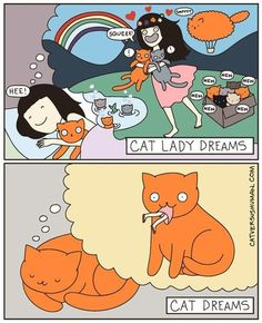 Cat's Dreams