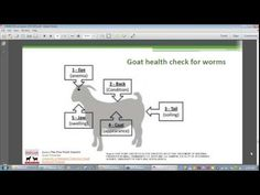 #goatvet highly recommends this video  - FAMACHA and goats: A practical on-farm technique for ...