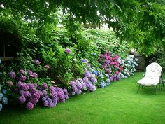 Hydrangeas surrounding fence borders.