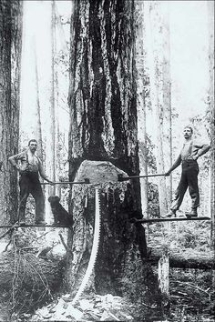 Loggers-love the dog posing next to the guy!