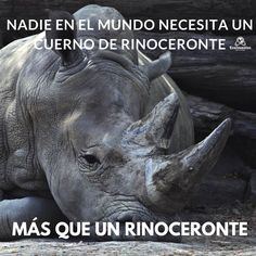 Rhino Species, Most Endangered Animals, Animal Welfare, Charity, Elephant, Creatures, News, Google, Blog
