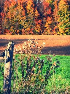 Autumn in Michigan. Weeds, wooden fence, trees.
