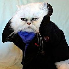 This Cat Wins Halloween (via BuzzFeed)