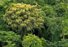 Parque Nacional do Jamanxim, Pará