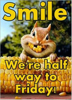 Smile We Are Half Way To Friday wednesday hump day wednesday quotes happy wednesday wednesday humor wednesday quote happy wednesday quotes Funny Wednesday Quotes, Happy Wednesday Images, Wednesday Greetings, Friday Quotes Humor, Wednesday Hump Day, Hump Day Humor, Good Morning Wednesday, Wednesday Humor, Sunday Quotes