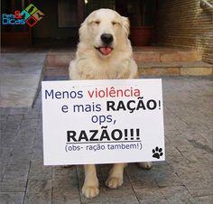 Fotos de animais engraçados para Facebook | Pets e Dicas