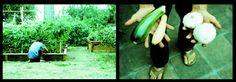 cy's summer bounty by ryan tatar
