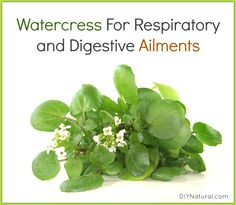Watercress (nasturtium) is a peppery leafed plant related to broccoli, and is a great source of vitamins A, B, and C, as well as iron, calcium, zinc, and iodine.