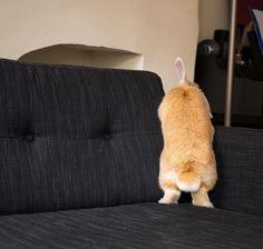 15 Unbelievably Adorable Rabbit Bums