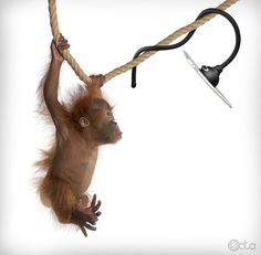 Monkey with an iPad and a TabletTail: Monkey Kit #PinToWin