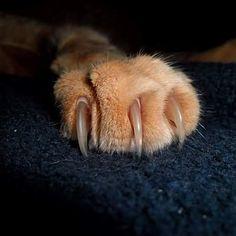 #HTers #HashTags #adorable #animal #animals #cat #catlover #catoftheday #cats #catsagram #catstagram #furry #ilovemycat #instacat #instagood #instagramcats #kitten #kittens #kitty #lovecats #lovekittens #nature #pet #pets #petsagram #petstagram #photooftheday #picoftheday #sleeping