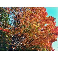 #fall #autumn  (at Despres Home / Photography Office)