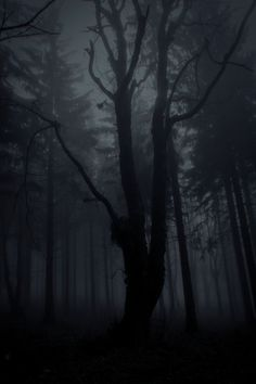 Free Image on Pixabay - Wood, Frightening, Forest, Nature Haunted Forest, Tree Forest, Dark Forest, Dark Landscape, Fantasy Landscape, Wattpad Background, Forest Background, Fade To Black, Nature Pictures