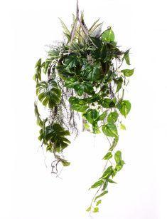 Kompozycja zielonych roślin wisząca