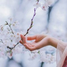 """""""Yes, I deserve a spring – I owe nobody nothing."""" ― Virginia Woolf, A Writer's Diary: Being Extracts from the Diary of Virginia Woolf Hand Photography, Spring Photography, Disney Films, Beautiful Hands, Beautiful Pictures, Princess Kaguya, Hand Flowers, Hand Reference, Disney Aesthetic"""