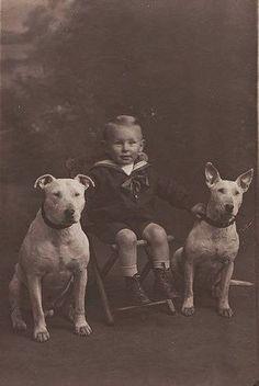 Bull Terrier 1910, colección C.H.