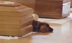 Dog refuses to leave master's coffin at funeral for earthquake victims