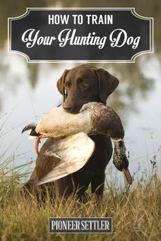 Be sure to check out my website for amazing tips on dog training at bestfordogtraining.com