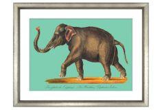 One Kings Lane - Asian Fusion - Carl Brodtmann, Elephant II